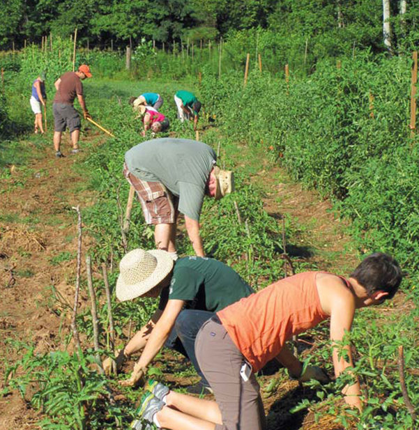crop mobbers at wolfscratch farm
