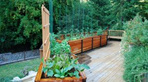 Drip irrigation system for watering your edible garden