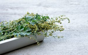 herbs for making vermouth
