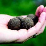 Homemade Seed Bombs