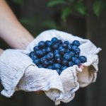 Fresh blueberries picked from shrub