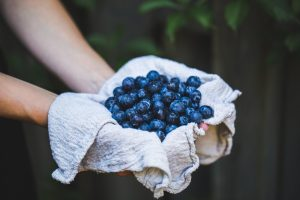 Fresh blueberries picked from shrub