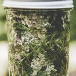 foraged yarrow in a jar