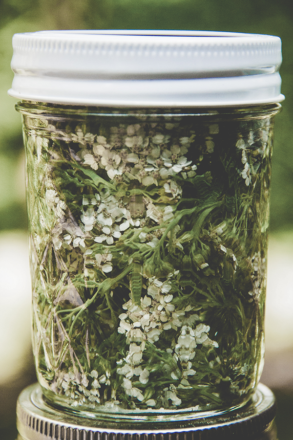 foraged yarrow in a jar