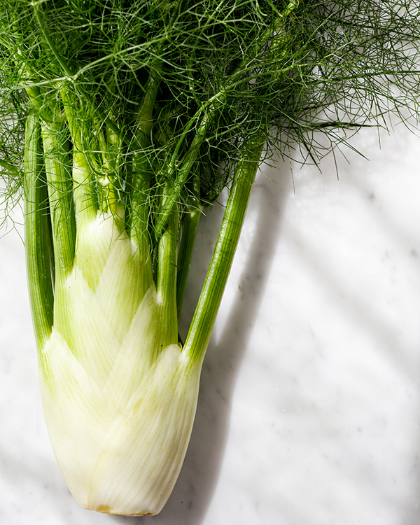 raw fennel bulb with fronds
