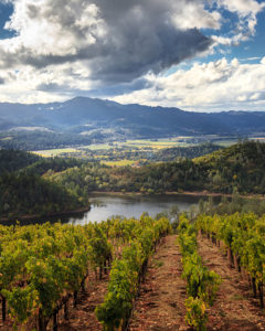 napa vineyards with river