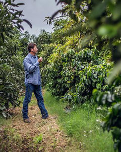 coffee trees in southern California