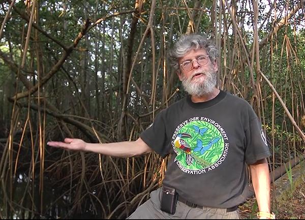 tom Goreau in mangroves