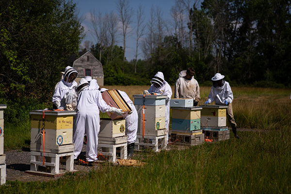 beekeepers with hives