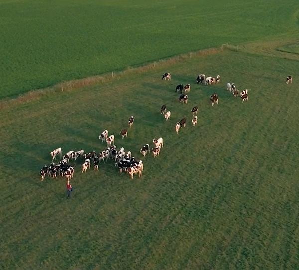 Craigs creamery pasture