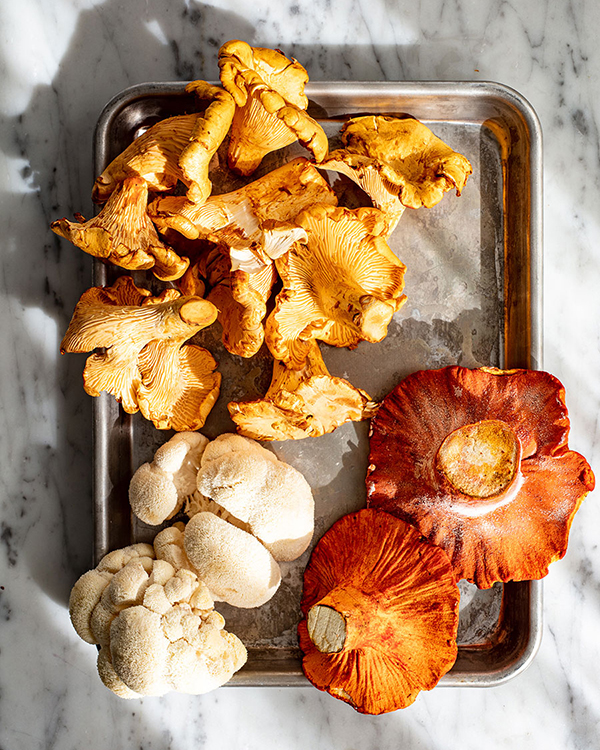 lobster chanterelle mushrooms