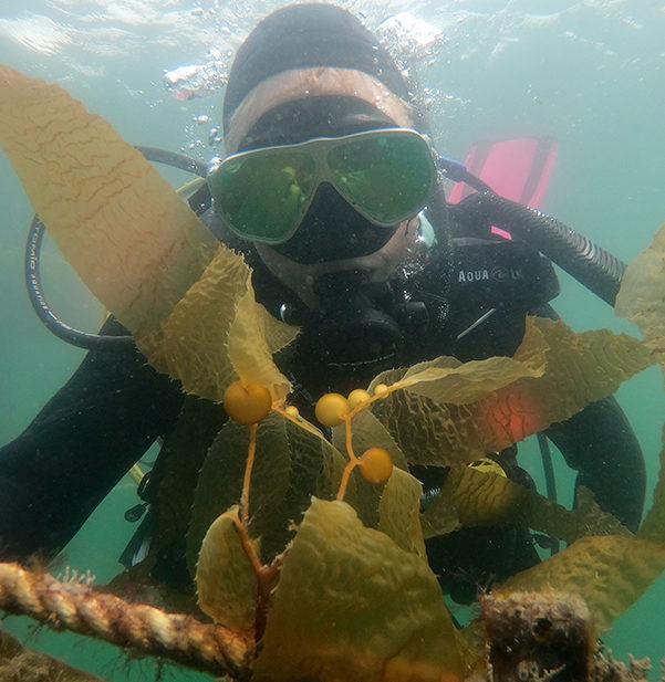 sunken seaweed with kelp