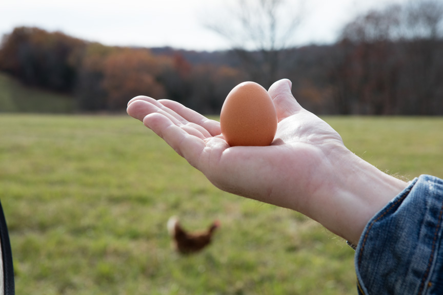 Organic pasture-raised egg from Blue Sky Family Farms