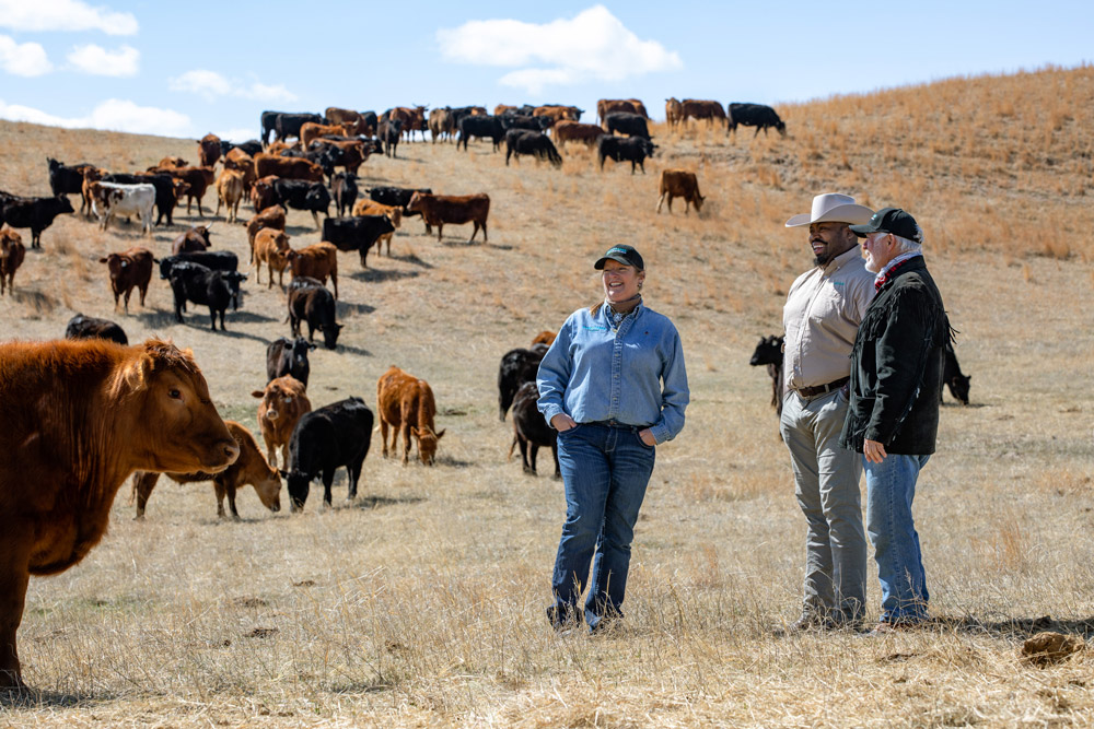 Kay Cornelius, Marshall Johnson and Dave Hutchinson observe cattle grazing on grasslands