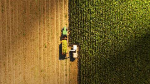 Truck harvesting farm field